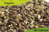 Organic Milk Thistle Seed 250gm
